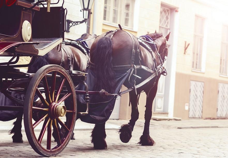 Hotel Brauhaus zum Löwen * * * Mit Pferd und Wagen im Urwald unterwegs